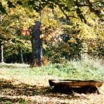 Le parc du Château en automne